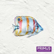 Primus Fish Wall Art - Butterfly Fish Handcrafted Wall Art.